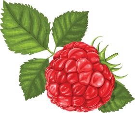 Rasberry Drawing