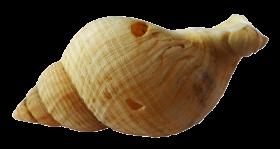 Sea Ocean Shell