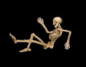 Skeleton, Skull