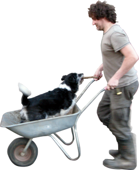 Wheelbarrow Dog