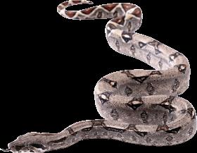 Snake Twirling