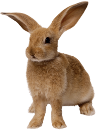 thin brown rabbit standing
