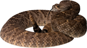 twirling Snake