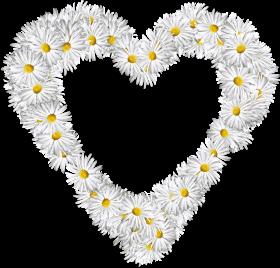 White Flowers Heart