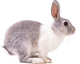 white gray rabbit sideview